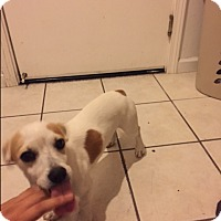 Adopt A Pet :: Darwin - Lodi, CA