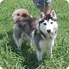 Adopt A Pet :: Juno (Has Application)