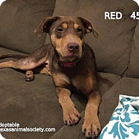 Adopt A Pet :: Red - Spring, TX