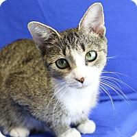 Adopt A Pet :: Shania - Winston-Salem, NC