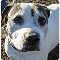Adopt A Pet :: Lucy - Yreka, CA