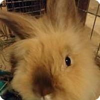 Adopt A Pet :: Milo - Woburn, MA