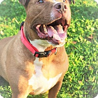 Adopt A Pet :: Bubba - Eastpointe, MI