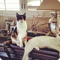 Adopt A Pet :: Emily and Lucy - Novato, CA