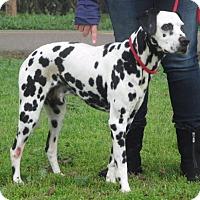 Adopt A Pet :: Pecas - Hollister, CA