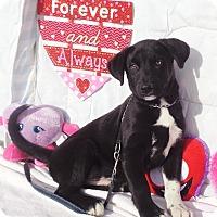 Adopt A Pet :: Webb - West Chicago, IL
