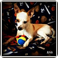 Adopt A Pet :: Alvin - Pascagoula, MS