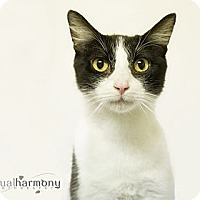 Adopt A Pet :: Benny - Phoenix, AZ