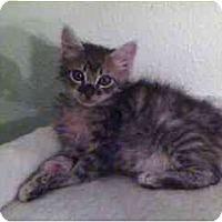 Adopt A Pet :: Eugene - Davis, CA