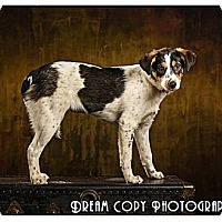 Adopt A Pet :: Faith - Owensboro, KY