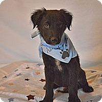 Adopt A Pet :: Emmett - Aurora, CO