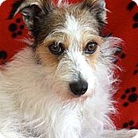 Adopt A Pet :: MURPHY ! - san diego, CA