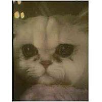 Adopt A Pet :: Lancelot - Owasso, OK