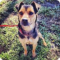 Adopt A Pet :: Juniper - Mission Viejo, CA