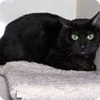Adopt A Pet :: Pablo - West Dundee, IL