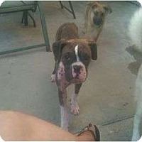 Adopt A Pet :: Mia - Lake Forest, CA