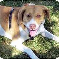 Adopt A Pet :: Murphy - Novi, MI