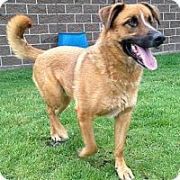 Adopt A Pet :: Ducky - Mill Creek, WA