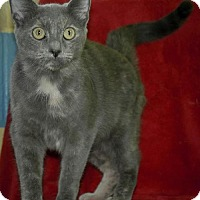 Adopt A Pet :: Peaches - Dublin, VA
