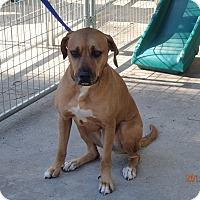 Adopt A Pet :: Trixie - Malabar, FL