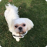 Adopt A Pet :: Murphy - Beavercreek, OH