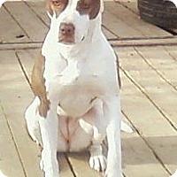 Adopt A Pet :: Stephie - Toledo, OH