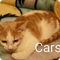 Adopt A Pet :: Carson - McDonough, GA