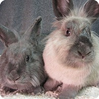 Adopt A Pet :: Brinley & Daelyn - Newport, DE
