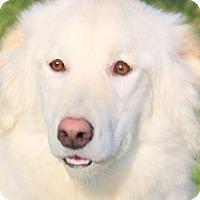 Adopt A Pet :: CHELSEA(WOW!! GORGEOUS GIRL!! - Wakefield, RI