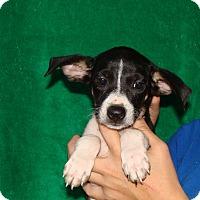 Adopt A Pet :: Fantasia - Oviedo, FL