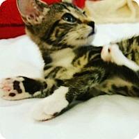 Adopt A Pet :: Georgia - Whitehall, PA