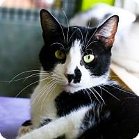 Adopt A Pet :: Mew - Austin, TX