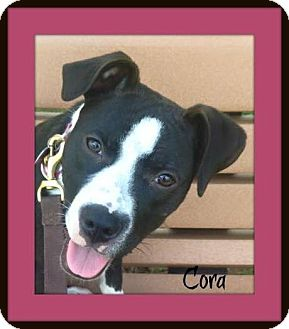 Pit Bull Terrier Mix Puppy for adoption in Memphis, Tennessee - Cora
