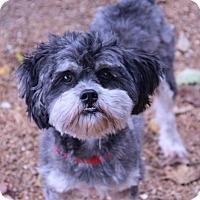 Adopt A Pet :: BooBoo - O Fallon, IL