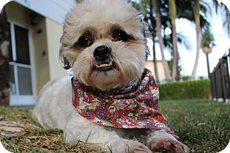 Lhasa Apso Mix Dog for adoption in Los Angeles, California - WIZARD