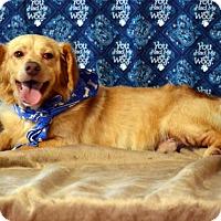 Adopt A Pet :: BoBo - Okeechobee, FL