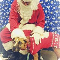 Adopt A Pet :: Maximilla - Marietta, GA