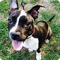 Adopt A Pet :: Jasper - Claxton, GA