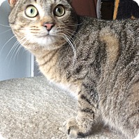 Adopt A Pet :: Pickles - Mt Pleasant, PA