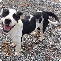Adopt A Pet :: Dinah - Lewisburg, TN