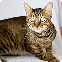 Adopt A Pet :: Leo - San Antonio, TX