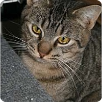 Adopt A Pet :: Sace - Walkersville, MD