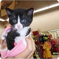 Adopt A Pet :: Chrissy - Frenchtown, NJ