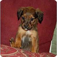 Adopt A Pet :: Chloe - Chula Vista, CA