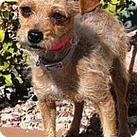 Adopt A Pet :: Tinkerbell - Gilbert, AZ