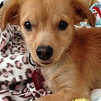 Adopt A Pet :: RUDY - san diego, CA