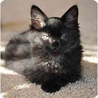 Adopt A Pet :: Tonka - Modesto, CA
