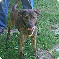 Adopt A Pet :: Slim - New Middletown, OH