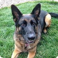 Adopt A Pet :: Referral - Echo - Denver, CO