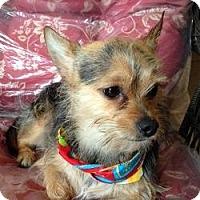 Adopt A Pet :: Harley - North Port, FL